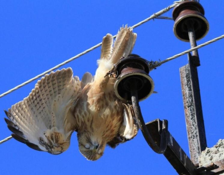 Какие птицезащитные устройства лучше использовать для ВЛ